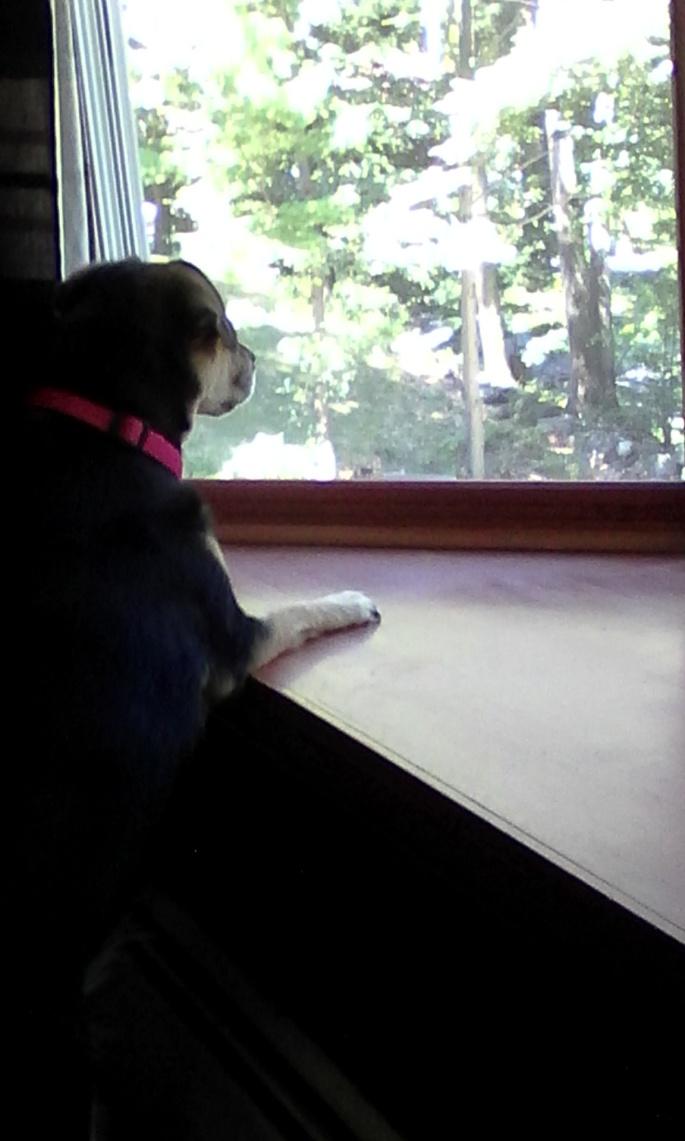 keelaa looking out window